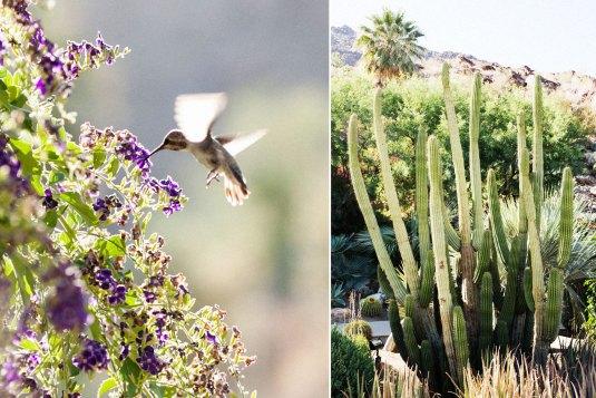 ai_hummingbird